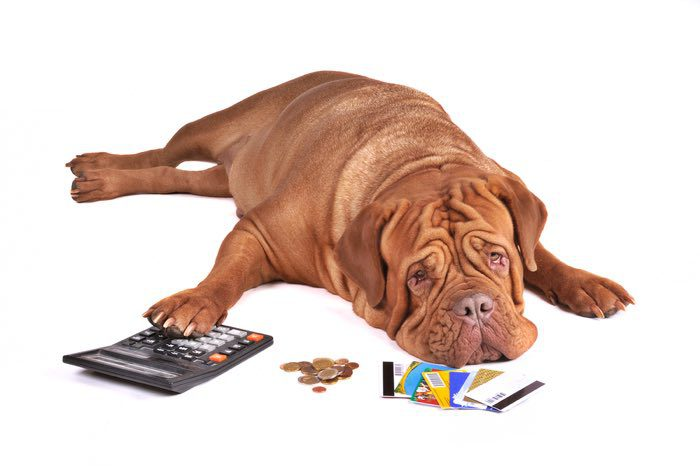 dog in debt